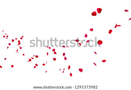 Red rose petals fly into the distance. Isolated white background #1295373982
