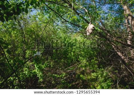 Habitat, breeding habitat, nesting habitat Penduline Tit (Remiz pendulinus). #1295655394