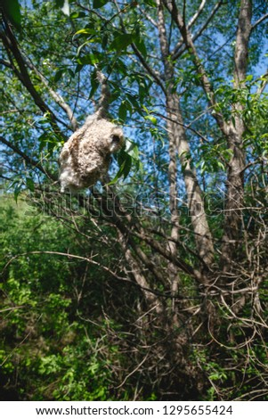 Habitat, breeding habitat, nesting habitat Penduline Tit (Remiz pendulinus). #1295655424