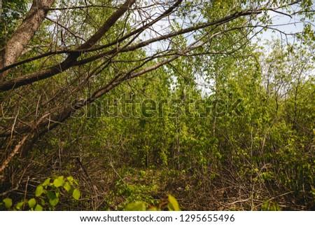 Habitat, breeding habitat, nesting habitat Penduline Tit (Remiz pendulinus). #1295655496