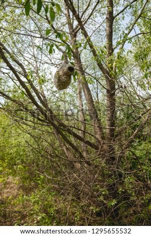 Habitat, breeding habitat, nesting habitat Penduline Tit (Remiz pendulinus). #1295655532