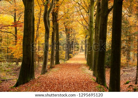 Autumn in the park, a colorful yellow forest #1295695120