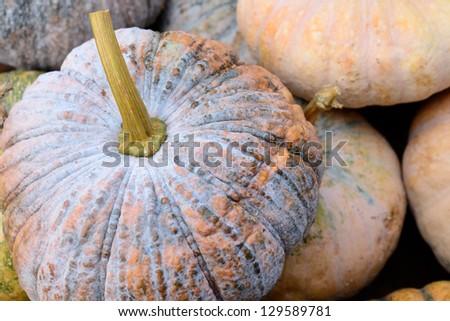 pumpkin #129589781
