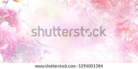 Abstract floral backdrop of pink flowers over pastel colors with soft style for spring or summer time. Banner background with copy space. #1296001384
