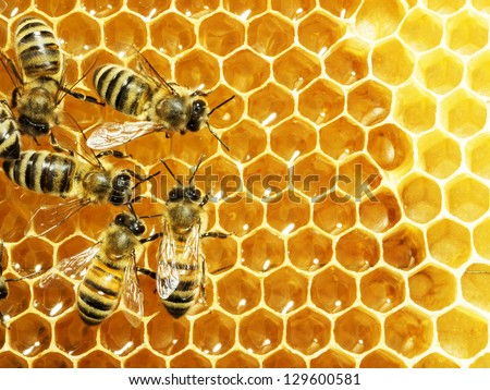 Close up view of the working bees on honey cells Royalty-Free Stock Photo #129600581