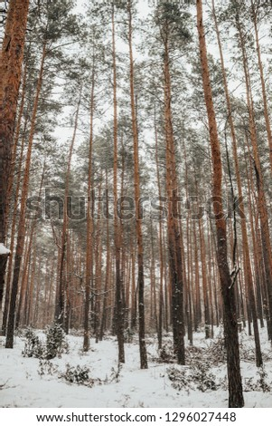 Winter forest in snow #1296027448
