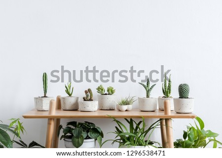 Scandinavian room interior with plants, cacti and succulents composition in design and hipster pots on the brown shelf. White walls. Modern and floral concept of home garden. Nature love.
