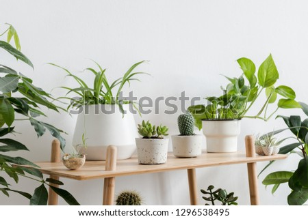 Scandinavian room interior with plants composition in design and hipster pots on the brown shelf. White walls. Modern and floral concept of home garden. Nature love. #1296538495