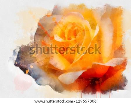 beautiful rose, watercolor