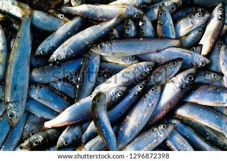 A Catch of Herring Royalty-Free Stock Photo #1296872398