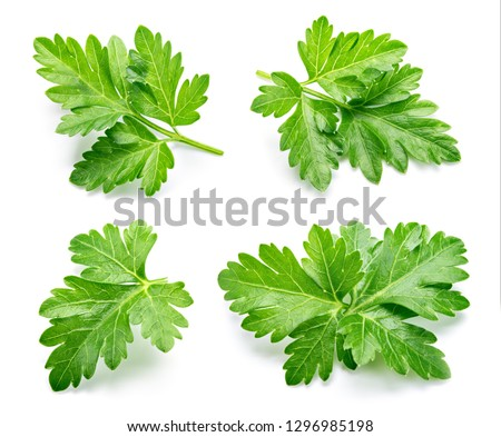 Parsley. Parsley isolated. Top view. Full depth of field. #1296985198