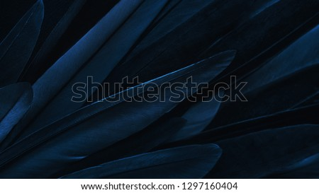 Exotic texture feathers background, closeup bird wing. Dark blue feathers for design and pattern. #1297160404