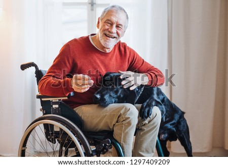 A disabled senior man in wheelchair indoors playing with a pet dog at home. Royalty-Free Stock Photo #1297409209
