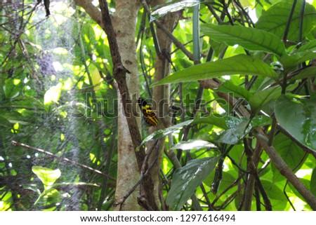 Beutiful brazilian butterfly on a plant.  #1297616494
