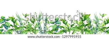 Green grass, wild plants, meadow herbs, summer field. Floral horizontal border. Watercolor stripe #1297995955