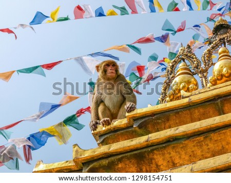 Macaque monkey sitting on the stupa in Buddhist temple Swayambhunath known as Monkey temple on a background of prayer flags and sky, Kathmandu, Nepal  #1298154751