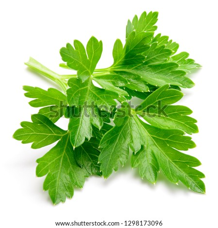 Parsley. Parsley isolated. #1298173096
