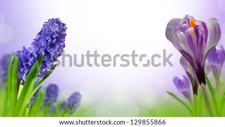 Hyacinth and Crocus #129855866