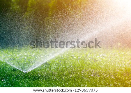 Lawn water sprinkler spraying water over lawn green fresh grass in garden or backyard on hot summer day. Automatic watering equipment, lawn maintenance, gardening and tools concept. #1298659075