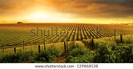 A Beautiful Sunset over a Barossa Vineyard Royalty-Free Stock Photo #129868538