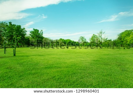 Lawn and trees green background with Beautiful lawn #1298960401