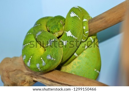 Snakes posing for picture