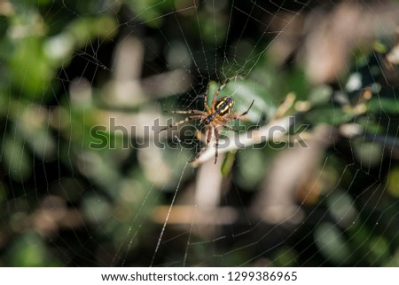 spider on the web #1299386965