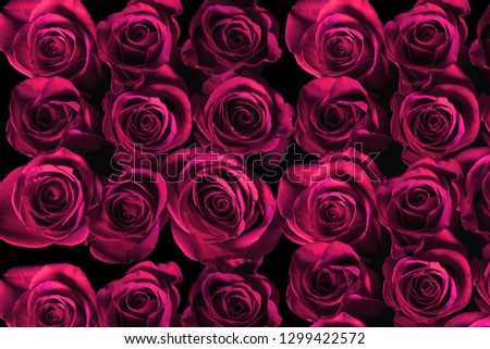 pink Roses background  #1299422572