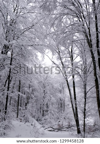 Winter forest in the snow. Mountains of snow. Frost and snowflakes. Location place Carpathian Ukraine #1299458128