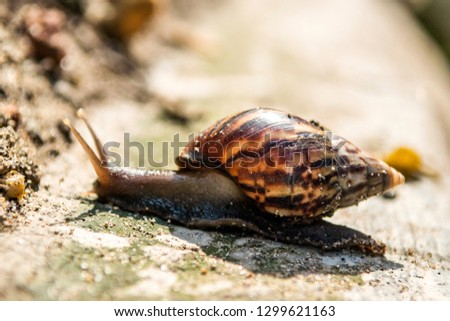 Snail moving on the ground animal outdoor wildlife with bokeh background #1299621163