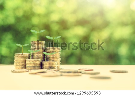 Term fund / time value of money / wealth creation, financial concept : Rising stacks of coins and green sprout, ideas about sustainable asset, fund investment from private income for long term growth #1299695593