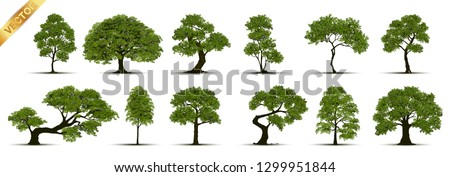 Collection  Realistic  Trees Isolated on White Background.  Royalty-Free Stock Photo #1299951844
