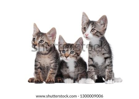 Sitting in a white studio little kittens #1300009006
