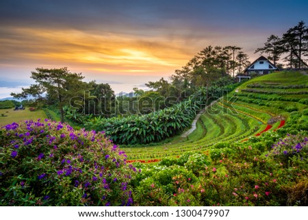 Huai Nam Dang National park in sunrise and beautiful sky in morning, Chiang Mai, Thailand. Majestic sunrise in the mountains landscape. #1300479907