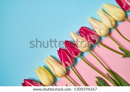 Creative two colors pastel background with yellow and pink tulips, copy space. Spring minimal concept. Womens Day, Mothers Day, Valentine's Day, Easter, birthday. Nature background. Flat lay, top view #1300594267