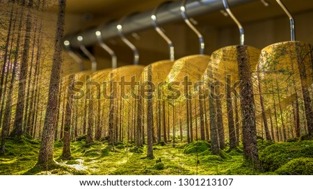 Clothes hanger with dresses in the forest. Concept for organic clothes, closet and sustainable fashion. #1301213107
