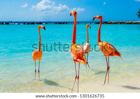 Pink flamingo on the beach from Aruba #1301626735