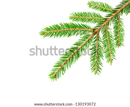 green banch of fir isolated on white #130193072