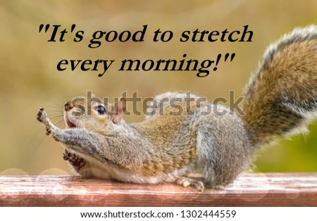 """Picture quote: """"It's good to stretch every morning!"""" With a cute Kentucky's squirrel stretching and acting like a dog acting like a dog, humor Typography 2019"""