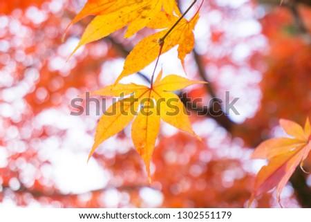 Autumn colors in Japan, Minokamo City, Gifu Prefecture #1302551179