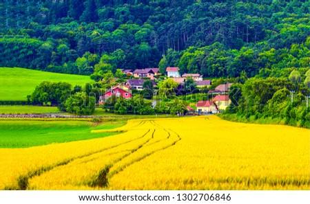 Agriculture farm field landscape. Agriculture farmland view. Agriculture farm field scene #1302706846