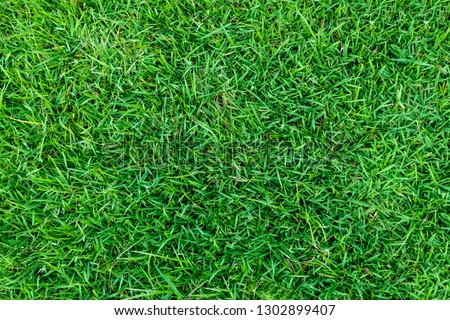 Green grass texture for background. Green lawn pattern and texture background. Close-up image. #1302899407