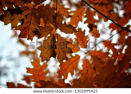 Autumn leaves of the tree #1302899425