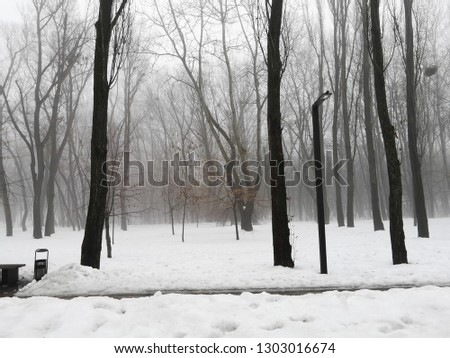 Trees in a foggy park. Thaw, snow with traces of people and animals. #1303016674