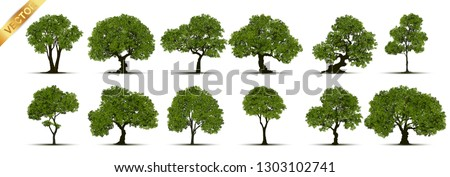 Collection of tree,trees isolated on white background.  #1303102741