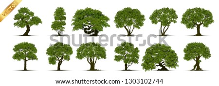 Collection of tree,trees isolated on white background.  #1303102744