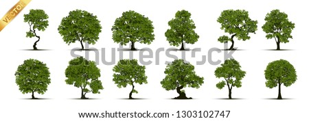 Collection of tree,trees isolated on white background.  #1303102747