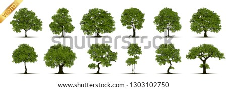 Collection of tree,trees isolated on white background.  #1303102750