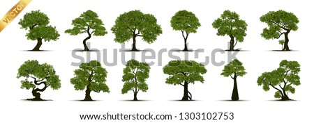 Collection of tree,trees isolated on white background.  #1303102753