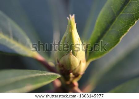 Macro photo of a bud #1303145977